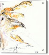 Barn Owl And Tree Acrylic Print