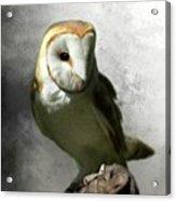 Barn Owl Acrylic Print by Crispin  Delgado