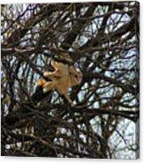 Barn Owl In A Tree Acrylic Print