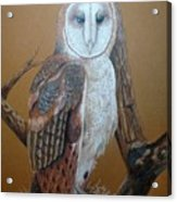Barn Owl On Tree Acrylic Print