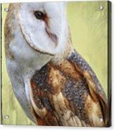 Barn Owl Portrait Acrylic Print