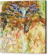 Barn Owl Thinking Acrylic Print