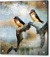 Barn Swallows Oil Acrylic Print