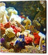 Barnacles And Sea Urchin Among Invertebrates In Monterey Aquarium-california  Acrylic Print
