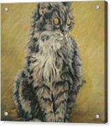 Barnhardt's Cat Acrylic Print