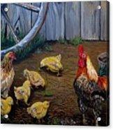 Barnyard Chickens Acrylic Print