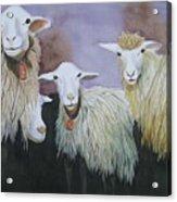 Barnyard Series Acrylic Print