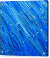 Barracuda At Palikir Pass Acrylic Print