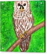 Barred Owl 08-18-2015 Acrylic Print