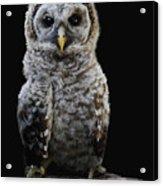 Barred Owl Baby -4 Acrylic Print