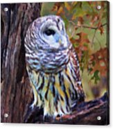 Barred Owl In The Rain Oil Painting Acrylic Print