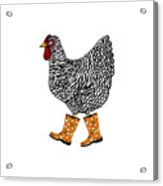Barred Rock With Boots Acrylic Print