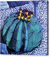 Barrel Buds Acrylic Print by Snake Jagger