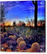 Barrel Cacti Ambling Along Acrylic Print