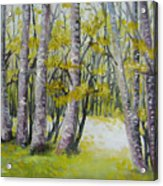 Barren Trees Acrylic Print
