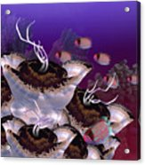 The Jeuter Barrier Reef  Acrylic Print