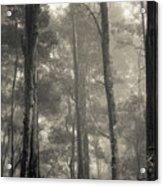 Barrington Mist Acrylic Print