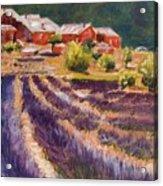 Lavender Smell Acrylic Print