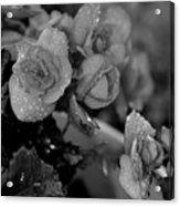 Basket Of Begonias Acrylic Print
