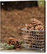 Basket Of Cones Acrylic Print