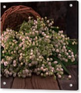 Basket Of Fresh Lily Of The Valley Flowers Acrylic Print