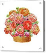 Basket With Ranunculus Flowers Watercolor Acrylic Print