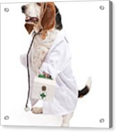 Basset Hound Dog Dressed As A Veterinarian Acrylic Print by Susan  Schmitz