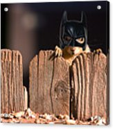 Bat Squirrel  The Cape Crusader Known For Putting Away Nuts.  Acrylic Print
