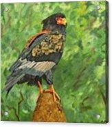 Bataleur Eagle Acrylic Print