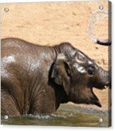 Bath Time At Dublin Zoo Acrylic Print