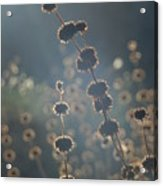 Bathed In Light Acrylic Print