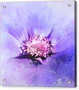 Bathed In Purple Acrylic Print