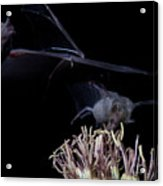 Bats At Work Acrylic Print
