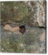 Bats Inside The Pyramid At Grupo Nohoch Mul At The Coba Ruins  Acrylic Print