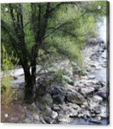 Baum An Der Mur Acrylic Print