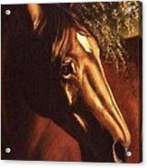 Bay Horse Art Horse Portrait Circe At Sunset Acrylic Print