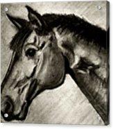 My Friend The Bay Horse Acrylic Print