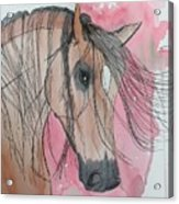 Bay Horse Watercolor Acrylic Print