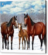 Bay Horses In Winter Pasture Acrylic Print