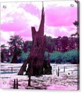 Bayou Pink Acrylic Print