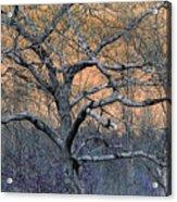 Bb's Tree 2 Acrylic Print