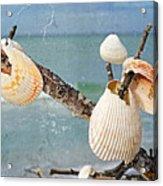 Beach Art - Seashell Shrine - Sharon Cummings Acrylic Print