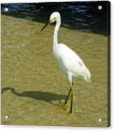 Beach Bird Acrylic Print