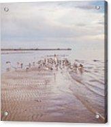 Beach Birds Acrylic Print