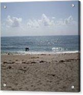Beach Bobbiong Acrylic Print