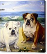 Beach Bullies Acrylic Print