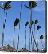 Beach Cabanas And Palm Trees Acrylic Print