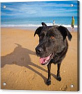 Beach Dog Acrylic Print