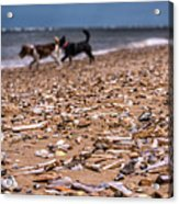 Beach Dogs Acrylic Print