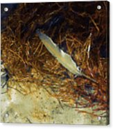 Beach Feather Acrylic Print